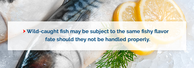 handle wild caught fish properly