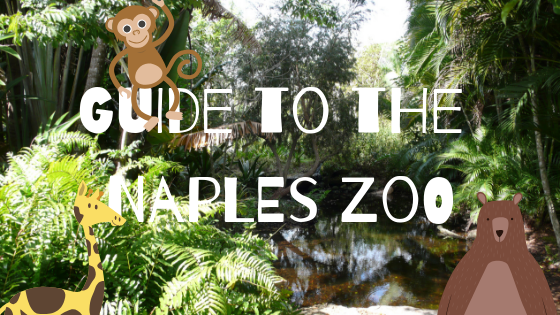 Guide to the Naples Zoo